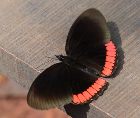 Beautiful butterflies were everywhere!