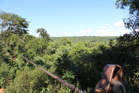 I tried to take video while I was ziplining, but I think I got nervous and hit the wrong button. So you are saved of my high pitched screaming and get a view of the jungle above the canopy.